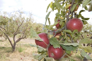 1. Visit An Apple Orchard